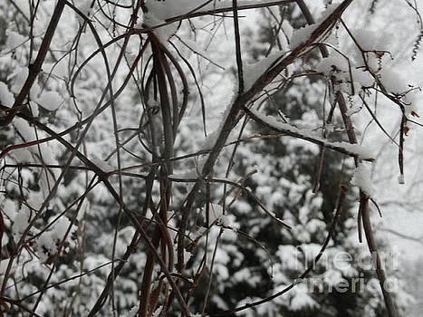 Lonely Winter by Diamante Lavendar