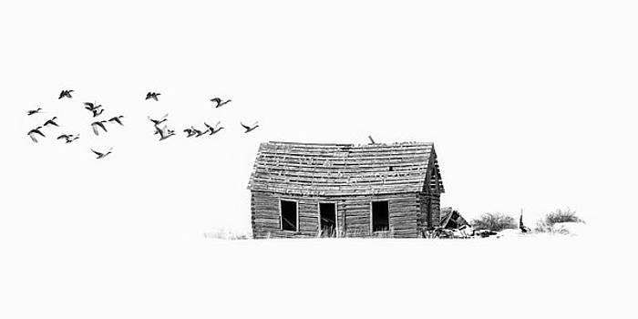 Lonesome But Peaceful by Ramona Murdock