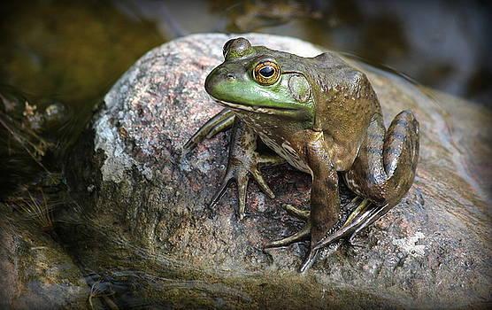 Lonesome Frog by Rosanne Jordan
