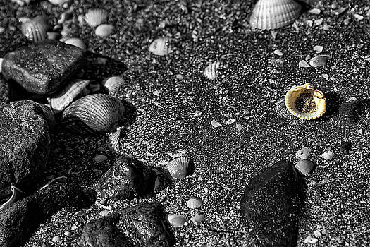 Lonesome Shell by Andy Griffiths