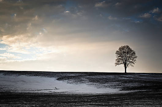 Lonesome Tree On A Hill III by David Sutton
