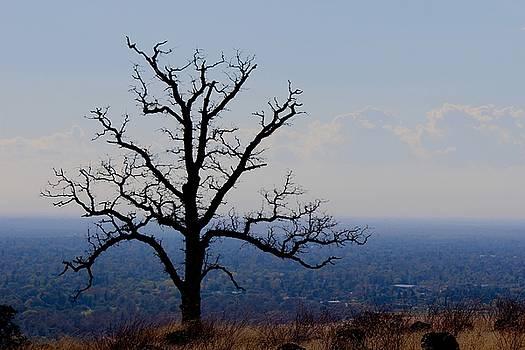 Lonetree by John Heywood
