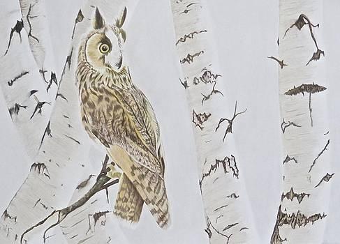Long Eared Owl by Michelle McAdams