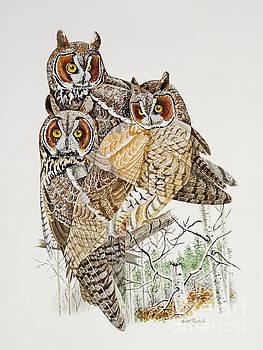 Long-eared Owl by Scott Rashid