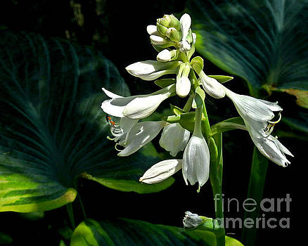 Long Fragrant Bloom by Kathy M Krause