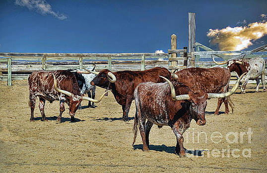 Long Horn Round Up by Diana Mary Sharpton