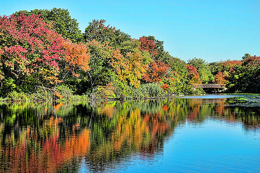 Long Island Nature Preserve by Frank Freni