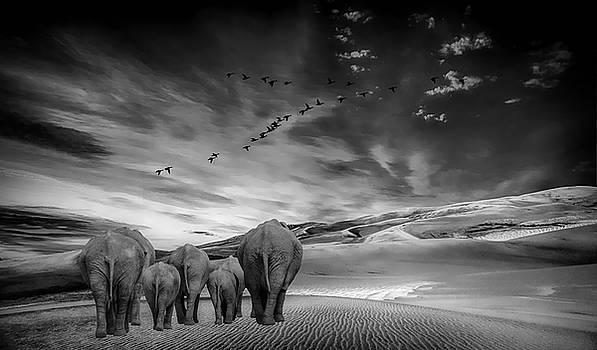 Long Journey Home by Andrea Kollo