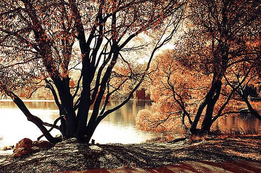 Jenny Rainbow - Long Shadows. Airy Lace of Autumn