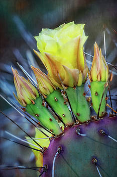 Saija Lehtonen - Long Spined Prickly Pear Cactus