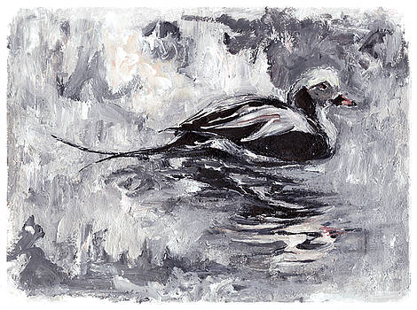 Long-tailed Duck by Abby McBride