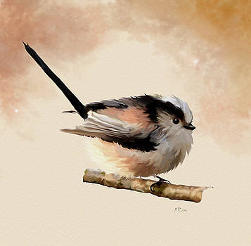 Bamalam  Photography - Long tailed Tit - Aegithalos Caudatus