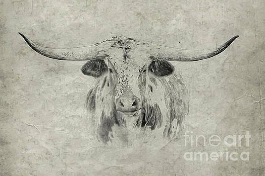 Longhorn by Randy Steele