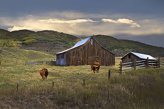 Longhorns on The Road to Steamboat Lake by John Hix