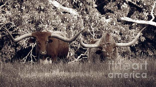 Longhorns - two head are better than one by Ella Kaye Dickey