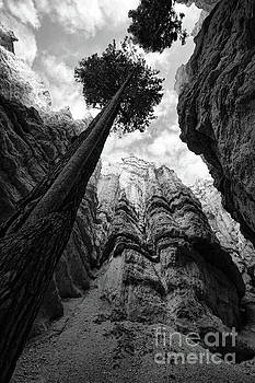 Chuck Kuhn - Look up BW Trees Bryce