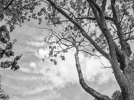 Look up into the Sky by John Rivera