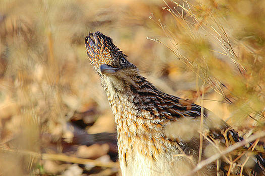 Looking A Little Cuckoo by Carolyn Wright