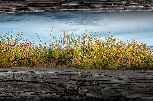 Randall Nyhof - Looking at Beach Grass between the Fence Rails