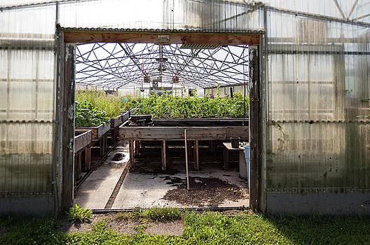 Looking inside a greenhouse entrance from the outside by Bradley Hebdon