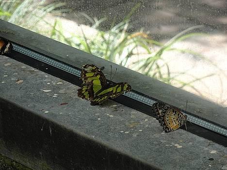 Green Orange Butterfly Looking Onward by Mozelle Beigel Martin