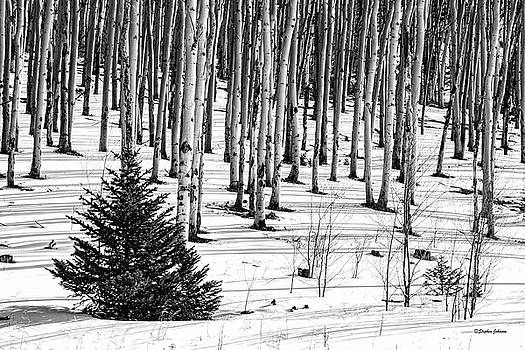 Looking Through The Aspen Black and White by Stephen Johnson