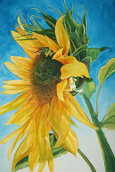 Looking Up - Sunflower 1 by Doris Daigle