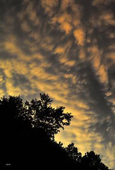 Dana Sohr - Looking Up #14