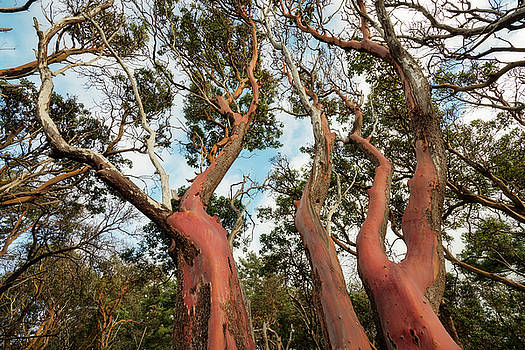 Looking up arbutus by Adam Gibbs