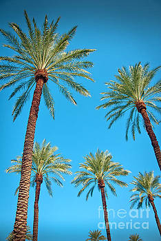 Looking Up at Palm Trees by David Zanzinger