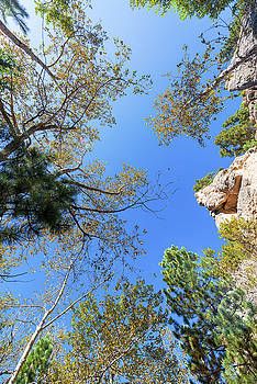 Looking up in South Piney Canyon by Jess Kraft