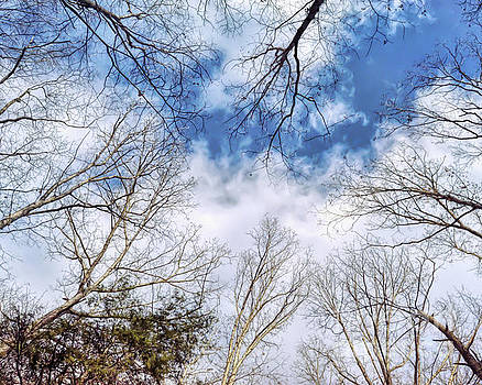 Looking Up by Kerri Farley