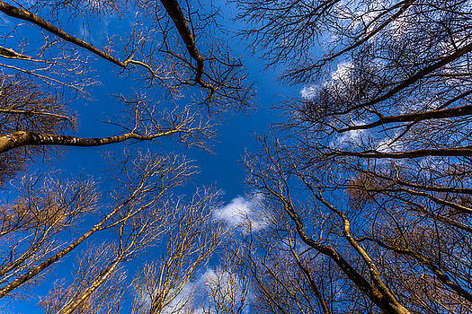 Looking Up by Stuart Gennery