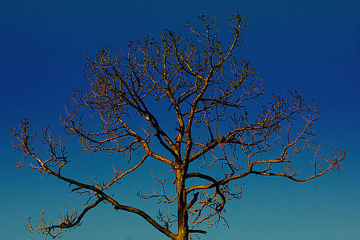 Looking Up, sunrise, Myakka State Forest by John Myers