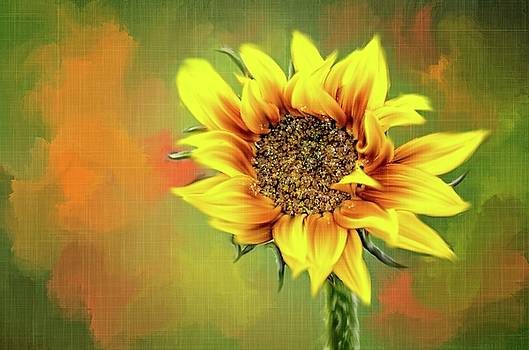 Looking up to the Sunflower by Mary Timman