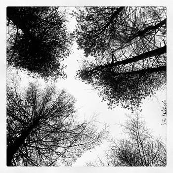 Looking Up!! #trees #igukers #instagood by Jennie Davies