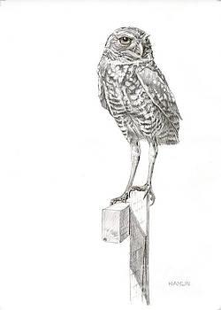 Lookout - Burrowing Owl by Steve Hamlin