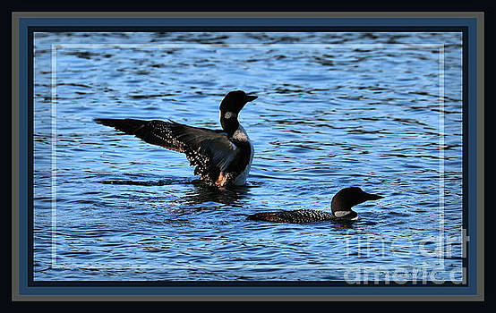Sandra Huston - Loon Pair on Tacoma, Framed