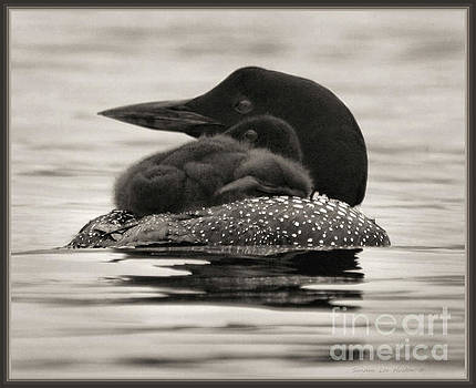 Sandra Huston - Loons, Father and Son Square