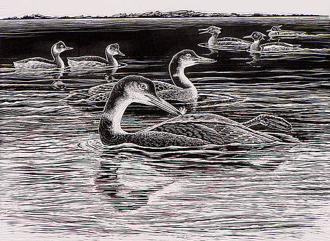 Loons Grebes and Mergansers by Shari Erickson