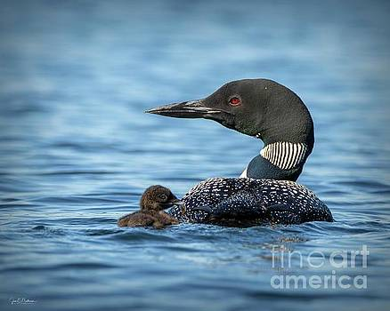 Loons of Woodbury Pond by Jan Mulherin