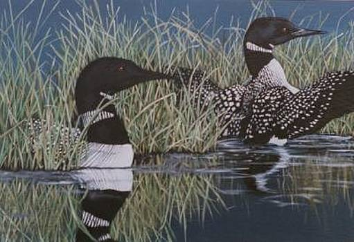 Loons by Syndi Michael