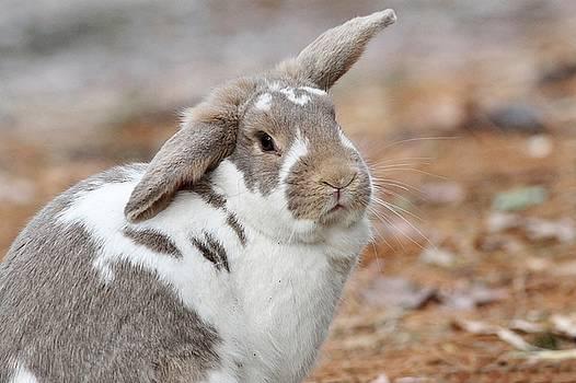 Lop-eared bunny by Linda Crockett