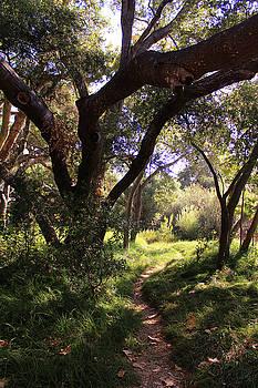 Robin Street-Morris - Los Penasquitos Canyon Preserve V