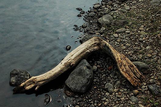 Donna Blackhall - Lost Appendage