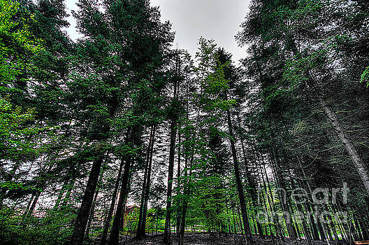 Lost in the Forest by Selim Aydin