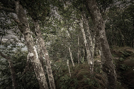 Lost in the TIlted Forest by Matt Spangard