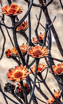 Lots of Burned Flowers by Ben Osborne