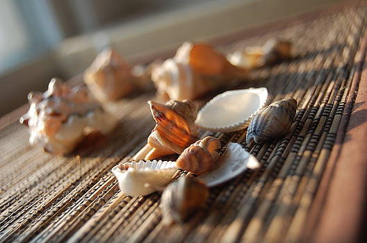 Lots Of Shells by Nicoleta Oproiu