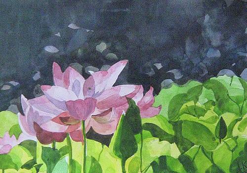 Lotus by Akhilkrishna Jayanth